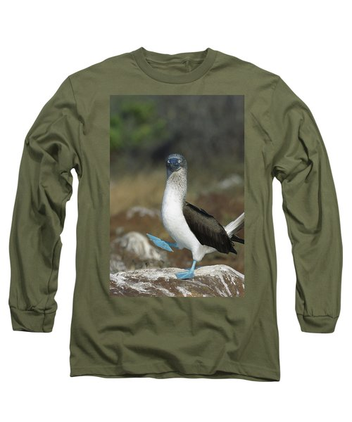 Blue-footed Booby Courtship Dance Long Sleeve T-Shirt by Tui De Roy