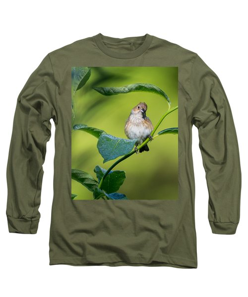 Indigo Bunting Female Long Sleeve T-Shirt by Bill Wakeley