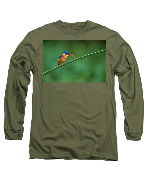 Malachite Kingfisher Tanzania Africa Long Sleeve T-Shirt by Panoramic Images