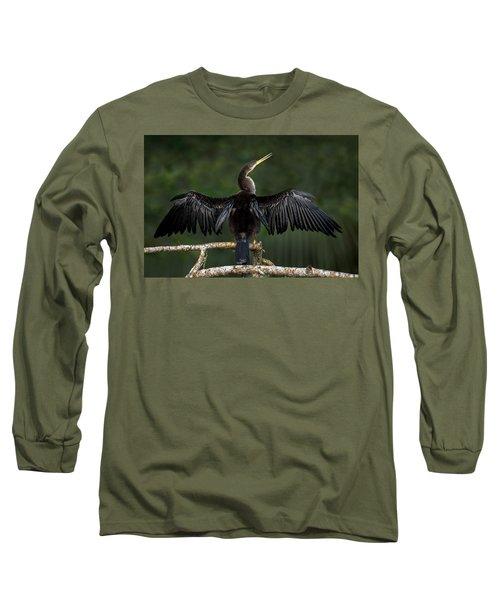 Anhinga Anhinga Anhinga Perching Long Sleeve T-Shirt by Panoramic Images