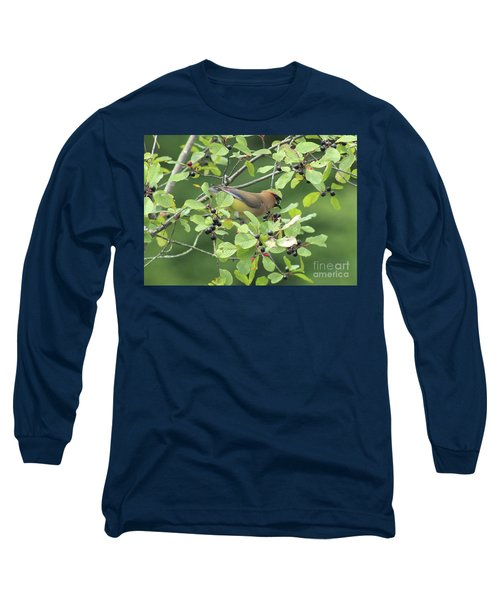 Cedar Waxwing Eating Berries Long Sleeve T-Shirt by Maili Page