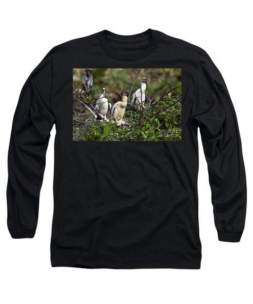Baby Anhinga Long Sleeve T-Shirt by Mark Newman