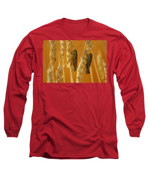 Grasshoppers On Wheat, Treherne Long Sleeve T-Shirt by Mike Grandmailson