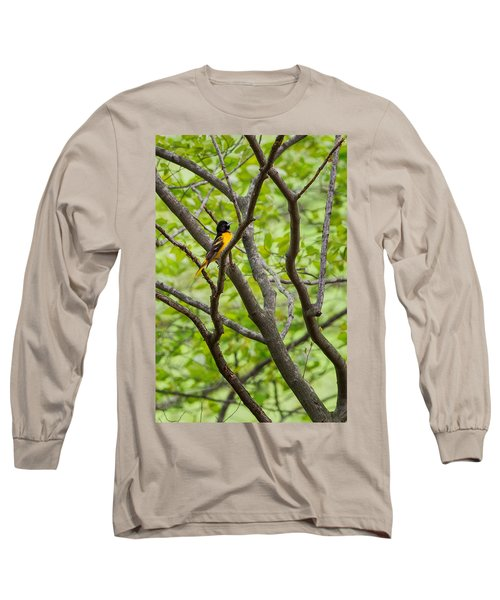Baltimore Oriole Long Sleeve T-Shirt by Bill Wakeley
