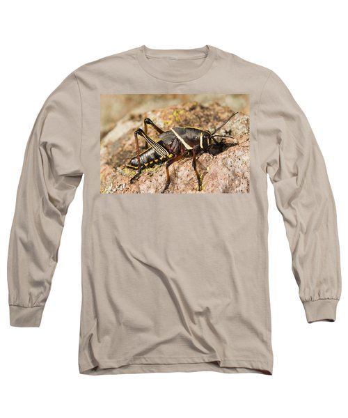 A Colorful Lubber Grasshopper Long Sleeve T-Shirt by Jack Goldfarb