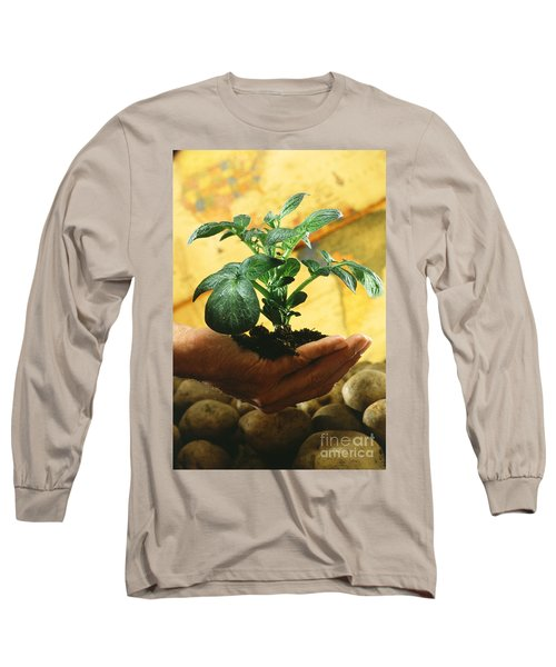 Potato Plant Long Sleeve T-Shirt by Science Source