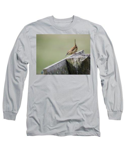 Carolina Wren Two Long Sleeve T-Shirt by Heather Applegate