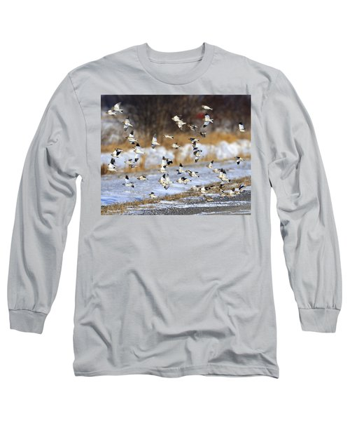 Snow Buntings Long Sleeve T-Shirt by Tony Beck