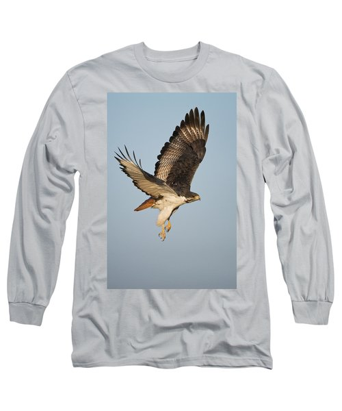 Augur Buzzard Buteo Augur Flying Long Sleeve T-Shirt by Panoramic Images
