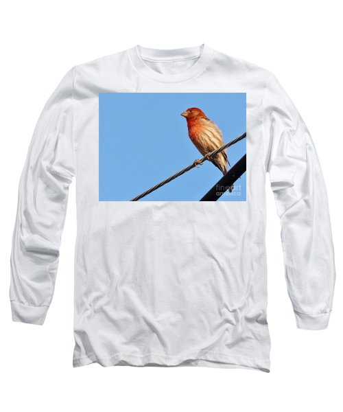 American Crossbill On Wire     Spring   Indiana   Long Sleeve T-Shirt by Rory Cubel