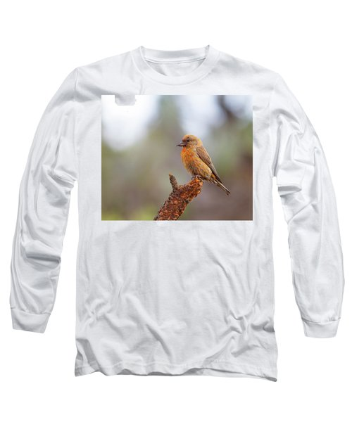 Male Red Crossbill Long Sleeve T-Shirt by Doug Lloyd
