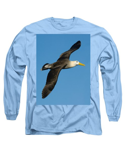 Waved Albatross Diomedea Irrorata Long Sleeve T-Shirt by Panoramic Images