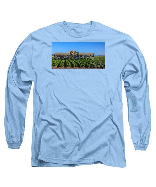 Winter Lettuce Harvest Long Sleeve T-Shirt by Robert Bales