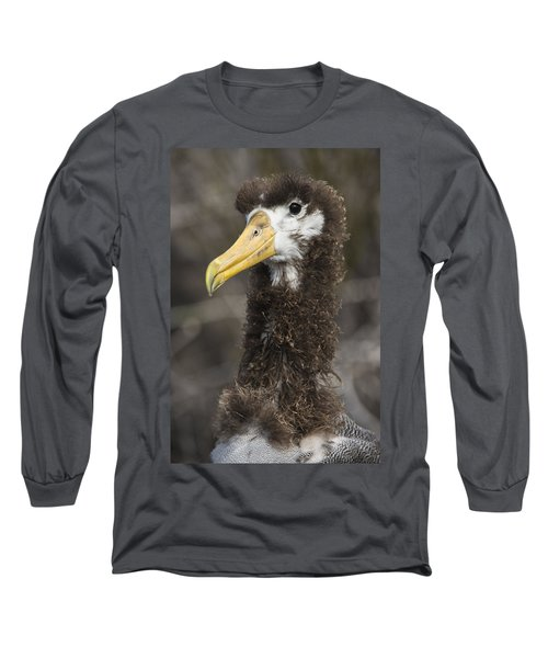 Waved Albatross Molting Juvenile Long Sleeve T-Shirt by Pete Oxford
