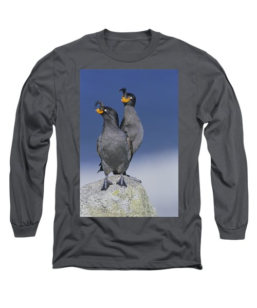 Crested Auklet Pair Long Sleeve T-Shirt by Toshiji Fukuda