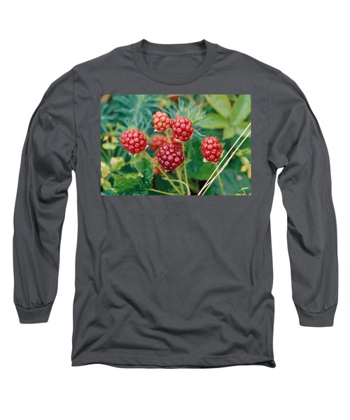 Highbush Blackberry Rubus Allegheniensis Grows Wild In Old Fields And At Roadsides Long Sleeve T-Shirt by Anonymous