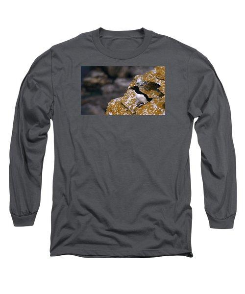 Razorbill Bird Long Sleeve T-Shirt by Dreamland Media