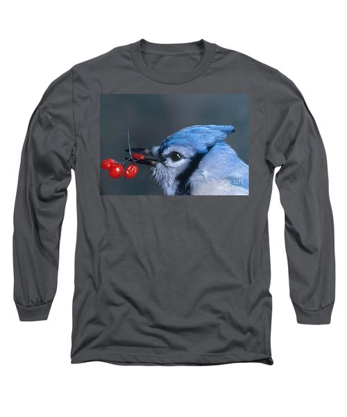 Blue Jay Long Sleeve T-Shirt by Photo Researchers, Inc.