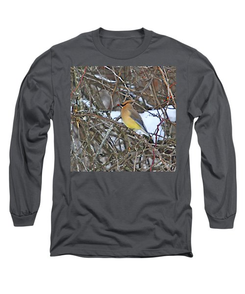 Cedar Wax Wing Long Sleeve T-Shirt by Robert Pearson