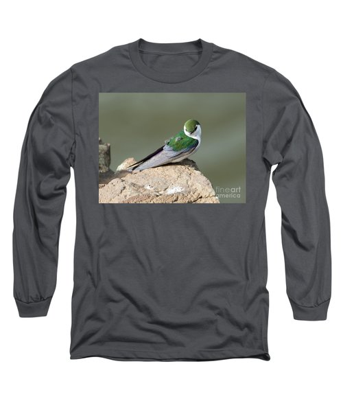 Violet-green Swallow Long Sleeve T-Shirt by Mike Dawson