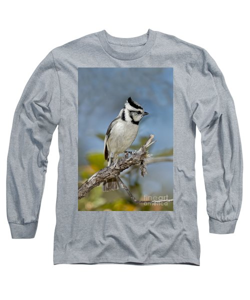 Bridled Titmouse Long Sleeve T-Shirt by Anthony Mercieca