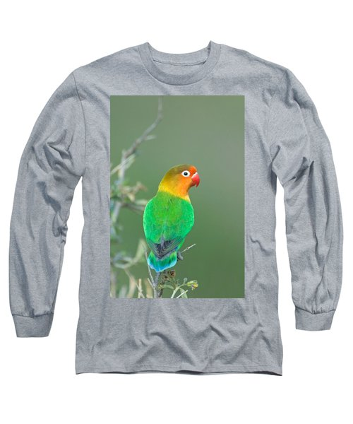 Close-up Of A Fischers Lovebird Long Sleeve T-Shirt by Panoramic Images