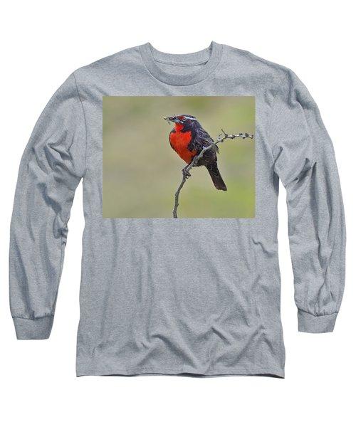 Long-tailed Meadowlark Long Sleeve T-Shirt by Tony Beck