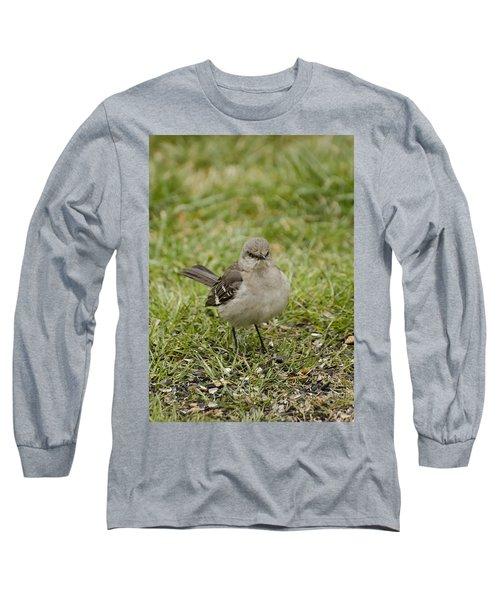 Northern Mockingbird Long Sleeve T-Shirt by Heather Applegate