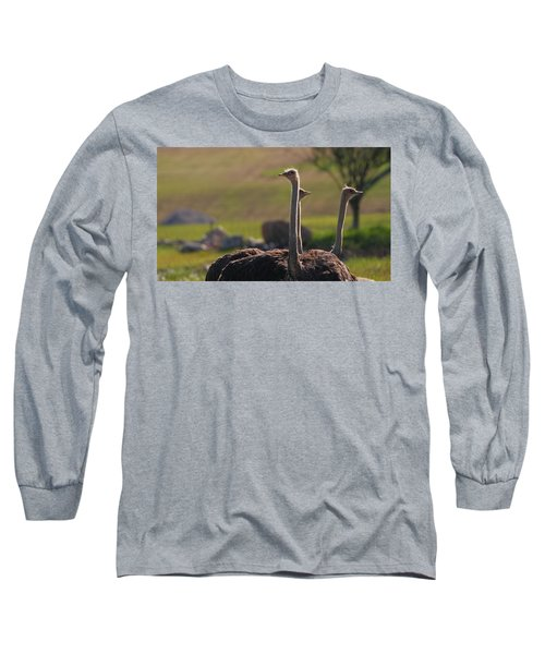 Ostriches Long Sleeve T-Shirt by Dan Sproul