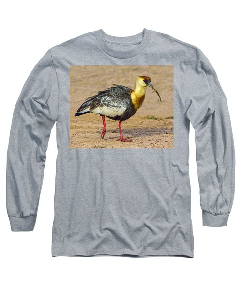 Buff-necked Ibis Long Sleeve T-Shirt by Tony Beck