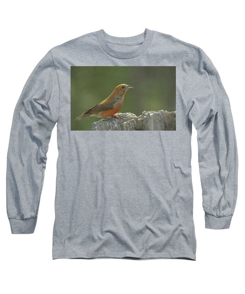 Red Crossbill Long Sleeve T-Shirt by Constance Puttkemery