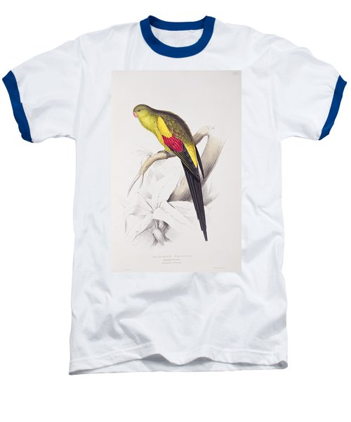 Black Tailed Parakeet Baseball T-Shirt by Edward Lear