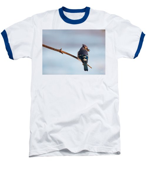 Blue Jay With Nuts Baseball T-Shirt by Everet Regal