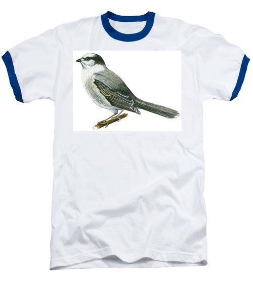 Canada Jay Baseball T-Shirt by Anonymous