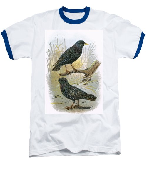 Common Starling Top And Intermediate Starling Bottom Baseball T-Shirt by English School