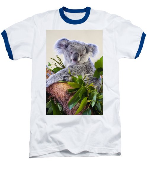 Koala On Top Of A Tree Baseball T-Shirt by Chris Flees