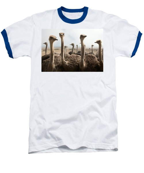 Ostrich Heads Baseball T-Shirt by Johan Swanepoel