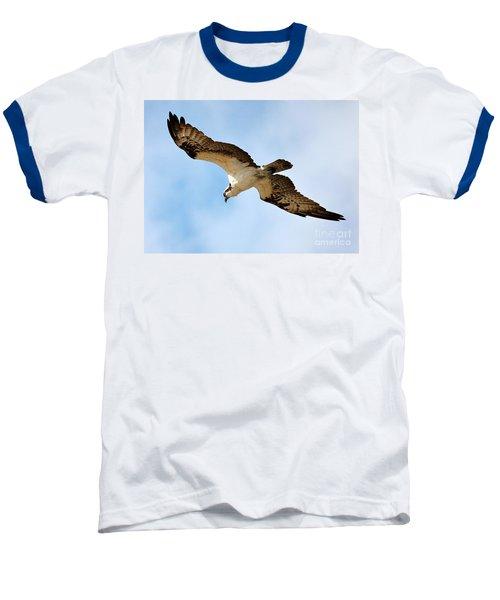 Hunter Osprey Baseball T-Shirt by Carol Groenen