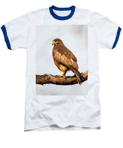 White-eyed Buzzard Butastur Teesa Baseball T-Shirt by Panoramic Images