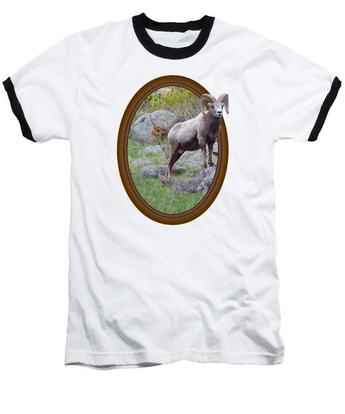 Colorado Bighorn Baseball T-Shirt by Shane Bechler