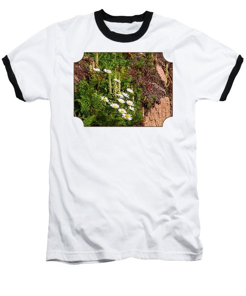 Wild Daisies In The Rocks Baseball T-Shirt by Gill Billington