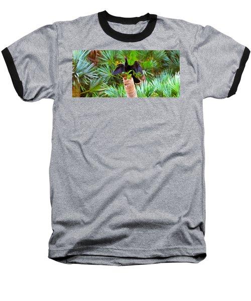 Anhinga Anhinga Anhinga On A Tree Baseball T-Shirt by Panoramic Images