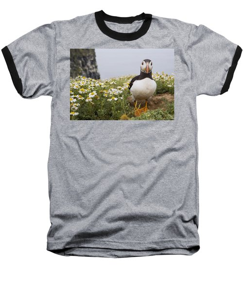 Atlantic Puffin In Breeding Plumage Baseball T-Shirt by Sebastian Kennerknecht