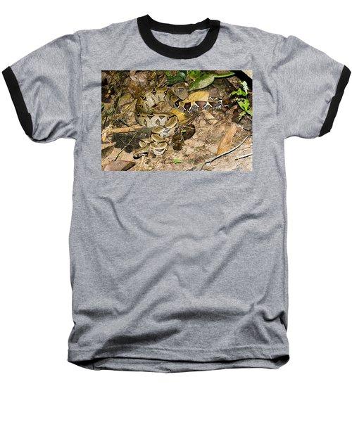 Boa Constrictor Baseball T-Shirt by Gregory G. Dimijian, M.D.