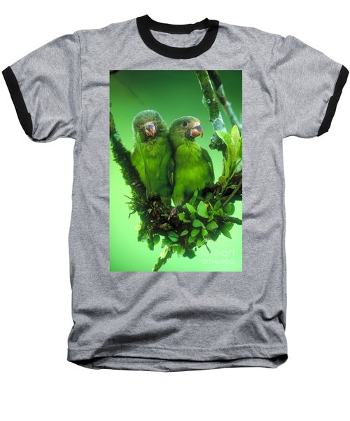 Cobalt-winged Parakeets Baseball T-Shirt by Art Wolfe