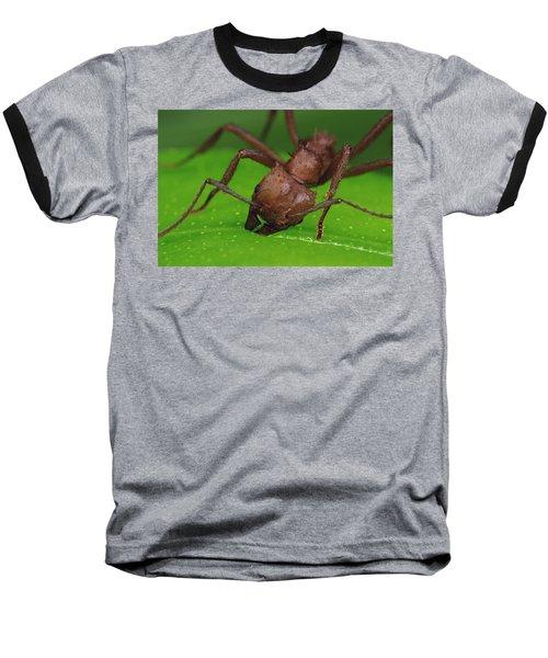 Leafcutter Ant Cutting Papaya Leaf Baseball T-Shirt by Mark Moffett