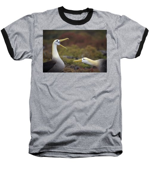 Waved Albatross Courtship Display Baseball T-Shirt by Tui De Roy