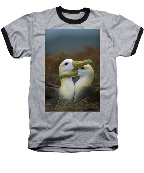 Waved Albatross Pair Bonding Galapagos Baseball T-Shirt by Tui De Roy