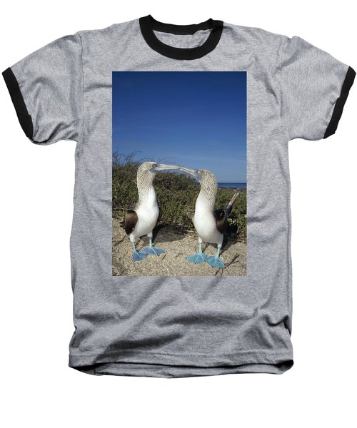 Blue-footed Boobies Courting Galapagos Baseball T-Shirt by Tui De Roy