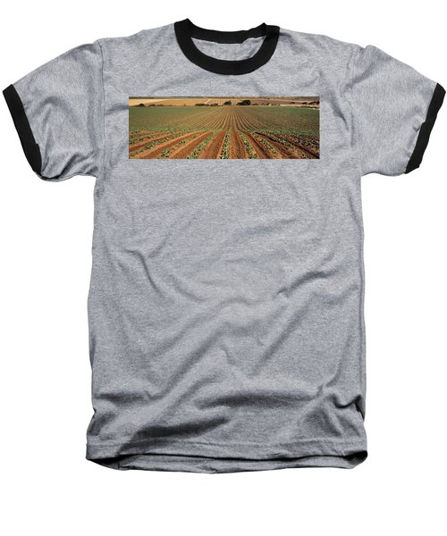 Agriculture - Sloping Field Of Early Baseball T-Shirt by Timothy Hearsum